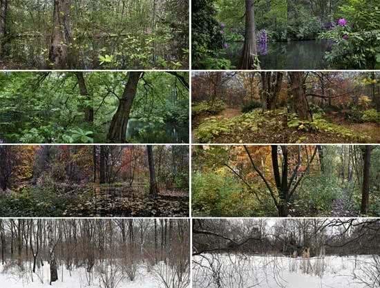 Tiergarten o el jard n rom ntico for El jardin romantico