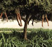 Ellen Kooi. Lissabon - tree. 2007. 90 x 172 cm.