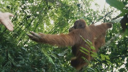 "Eduardo Aznar ""Okaimal"". Gunung Leuser (Sumatra)."