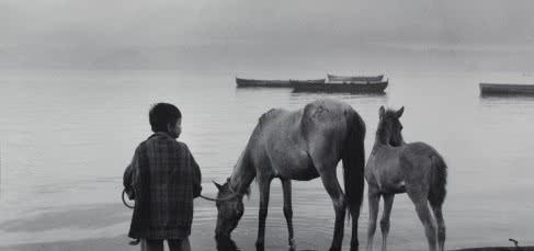 Manuel Carrillo. Niño dando de beber a los caballos. Veracruz, 1956.