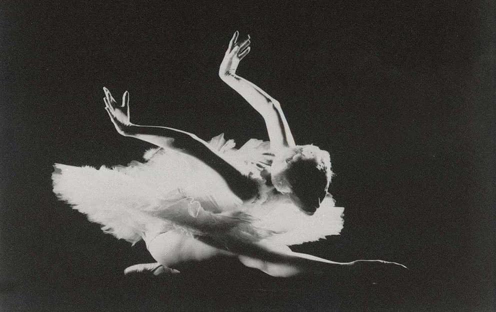 La muerte del cisne. Fondo CND. Foto: Paco Ruiz.