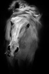 Nicolás Haro. 'Equma. La latitud de los caballos'.