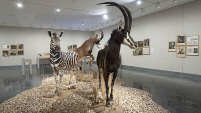 Joan Fontcuberta. Serie Fauna. ©Manuel Castells.
