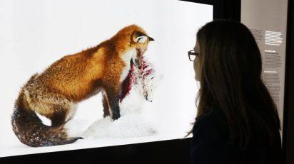 La muestra reúne las 100 mejores imágenes de 2015 seleccionadas en el concurso anual de fotografía de naturaleza que organizan el Museo de Historia Natural de Londres y la revista BBC Wildlife Magazine. Este concurso, iniciado en 1965, se ha convertido en el foro mundial más respetado del arte de la fotografía de naturaleza.