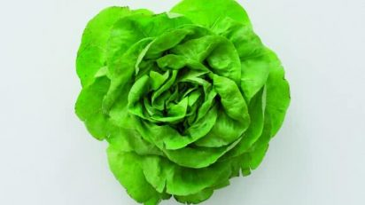 Karin Sander. The Head Lettuce (2012-2016).