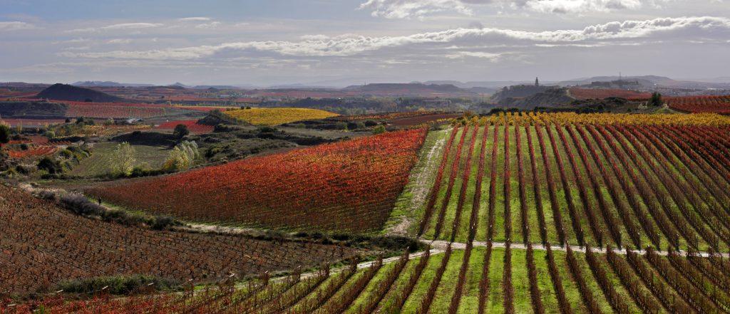 Viñedos en otoño. La Rioja.
