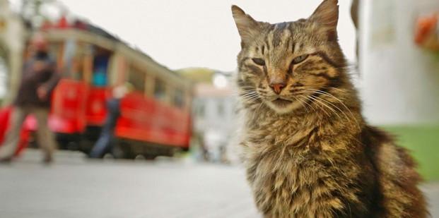 Kedi Gatos de Estambul