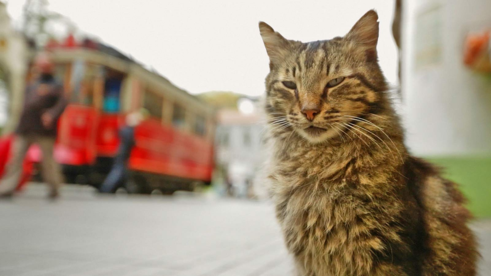 Kedi Gatos de Estambul