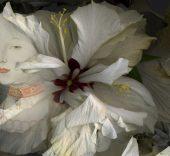 Paloma Navares. Hibiscus blancos. Canción de primavera, 2017 (detalle).