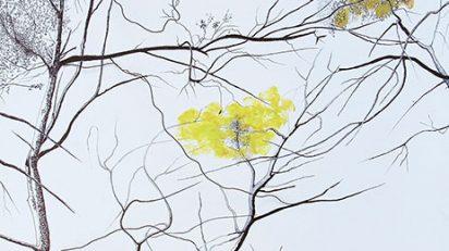 Bosque infinito VI. TATIANA BLANQUÉ. Rotulador permanente, óleo y alambre/tela. 50x50 cm.