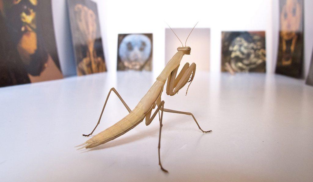 Jordi Abelló, Mantis, 2015 (fotograma del vídeo). Vídeo. Color, sin sonido. Duración: 4' 23''. Medidas variables. Colección del artista. © de la obra, Jordi Abelló, 2019.