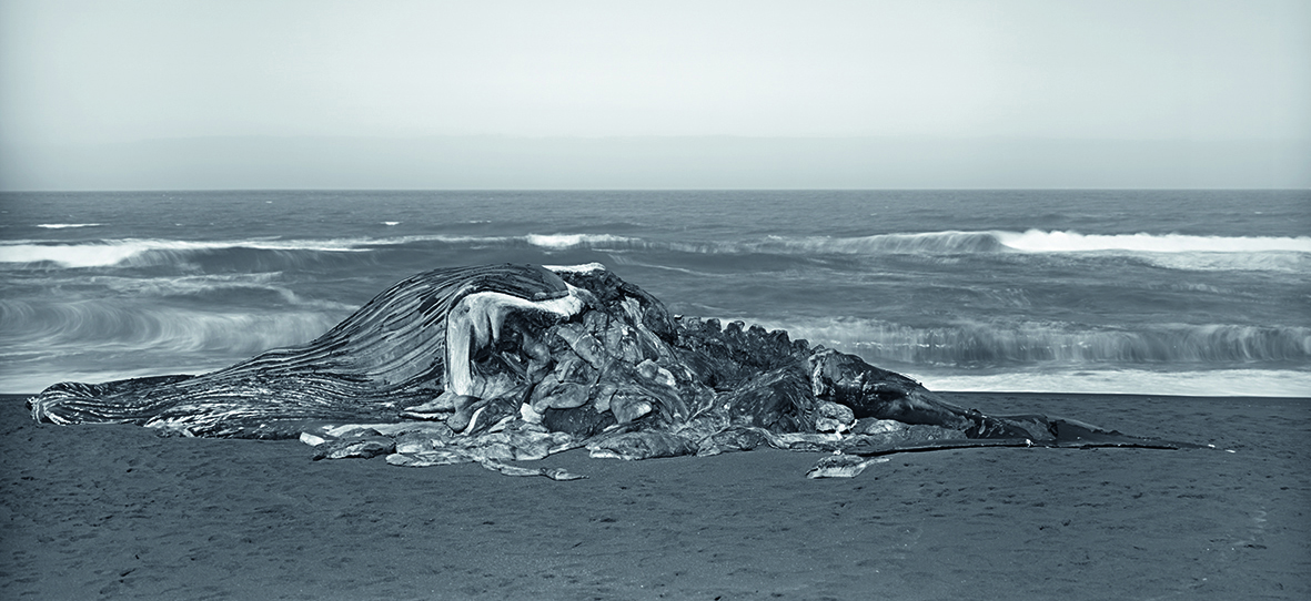 Balena, Pacifica, 2015. © Richard Learoyd. Courtesy of the artist and Fraenkel Gallery, San Francisco.
