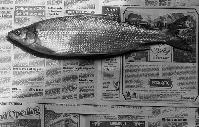 Fish, 1985. Impresión en gelatina de plata 40,64 x 50,8 cm. ©The Robert Mapplethorpe Foundation.