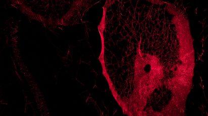 Tomás Saraceno. ¿Cómo atrapar el universo en una tela de araña?