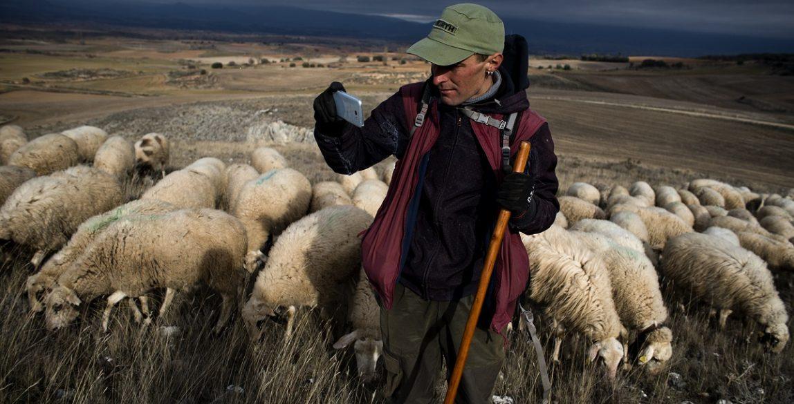 España, Burgos, comarca de La Bureba, Rojas de Bureba. Aitor Antón, pastor, con su rebaño. © Navia.