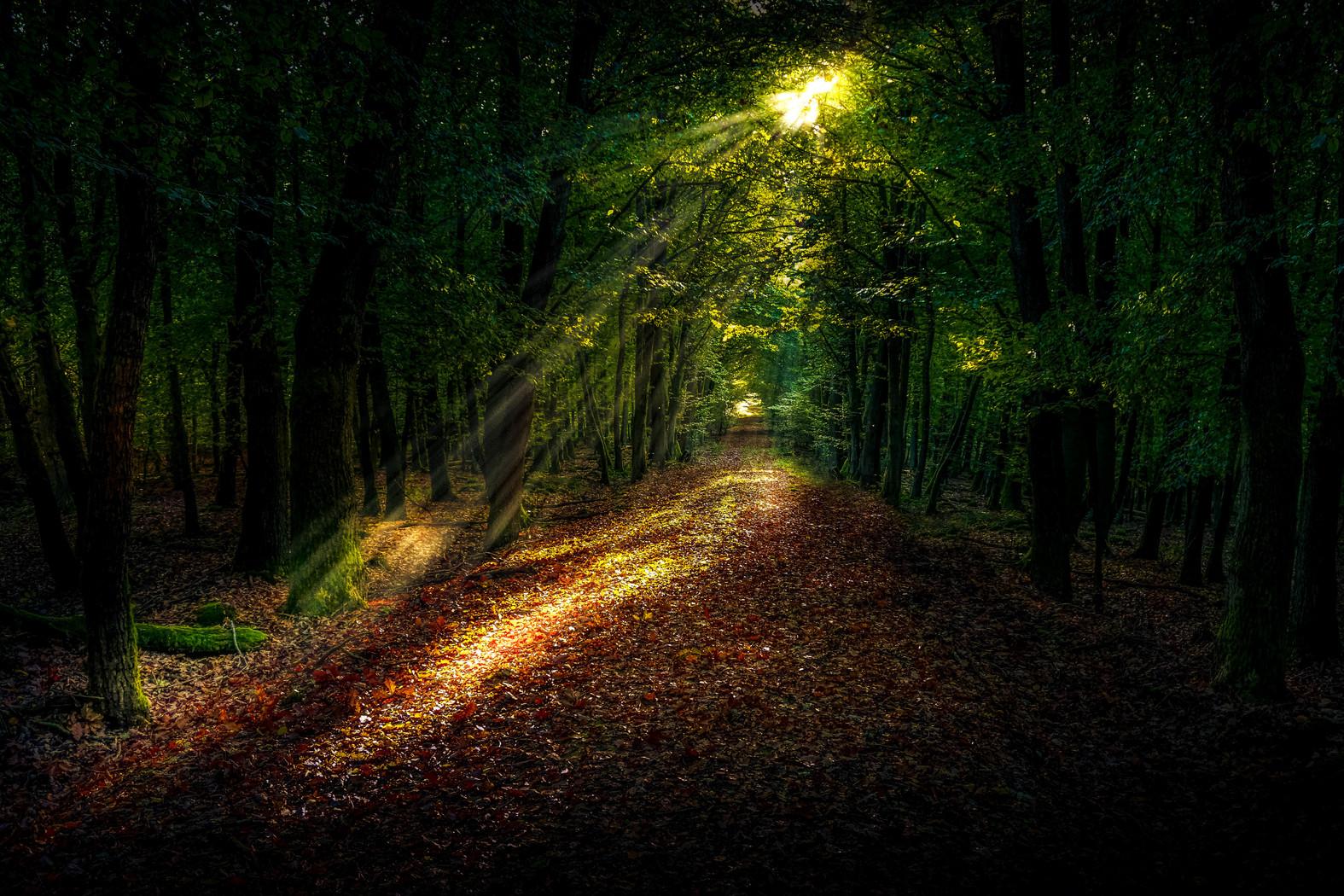 BOSQUE landscape-tree-nature-forest-path-grass-1417529-pxhere.com