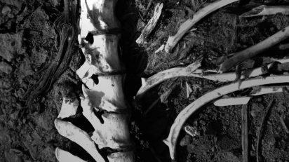 bones_vertebral_column_corpse_animal-854567.jpg!d